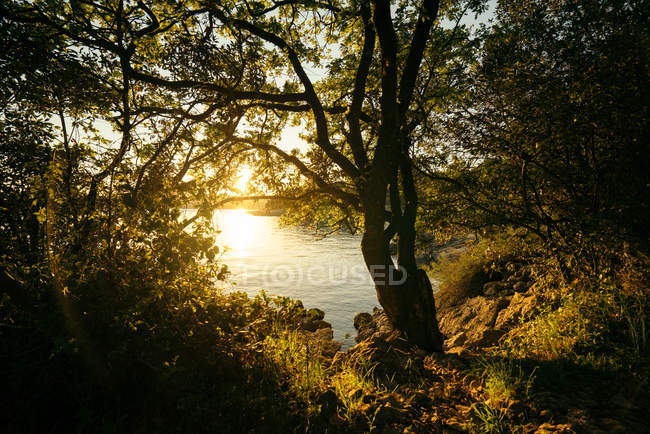 Tranquil nature scene at lake in forest — Stock Photo