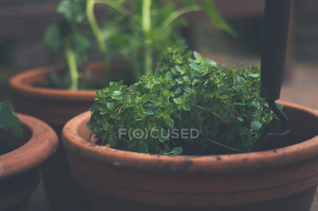 Close-up shot of a green potted plant — Stock Photo