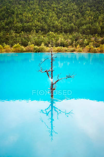 Lonely tree reflected in turquoise blue water. — Stock Photo