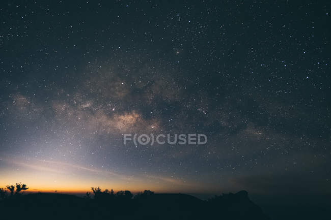 Silhouette of trees under the starry night sky — Stock Photo