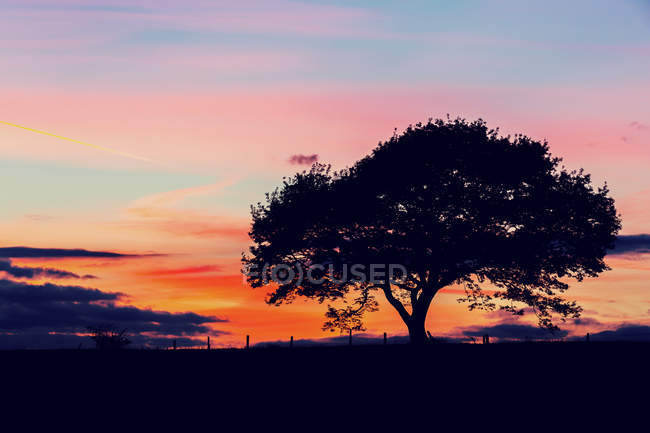 Beautiful silhouette of trees under pink sunset sky in Germany — Stock Photo