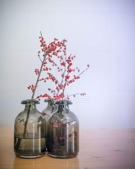 Red flowering plants in vase on table indoors — Stock Photo