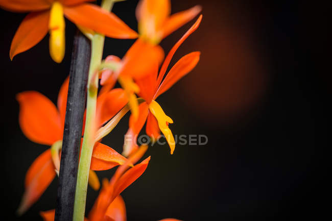 Close-up nature shot of orange flowers blooming — стоковое фото