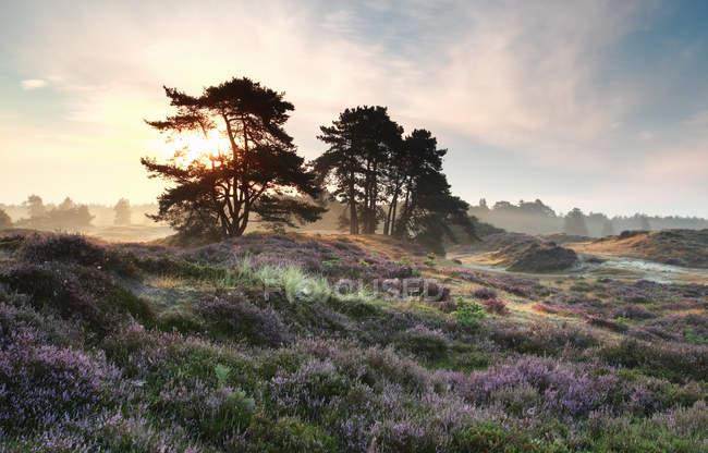 Landschaftlich reizvolle Naturlandschaft von lila Wiese und Bäumen bei Sonnenuntergang — Stockfoto