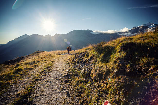 Adventure shot of people standing on a mountain on a sunny day — Stock Photo