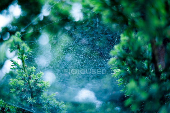 Closeup view of spider web in forest — Stock Photo