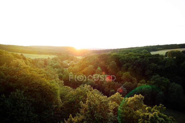 Malerische Landschaft von einem sonnigen Feld — Stockfoto