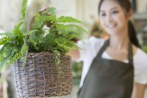 Chinese florist holding basket with plant in shop — Stock Photo