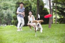 Casal chinês jogando frisbee para beagle bonito — Fotografia de Stock