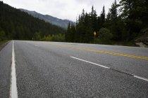 Вид на дорогу через сосновый лес — стоковое фото