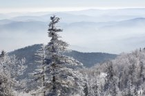 Snow-covered trees in mountains of  China — Stock Photo