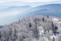 Arbres enneigés dans les montagnes de Chine — Photo de stock