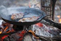 Poissons grillés dans la poêle sur feu de camp — Photo de stock