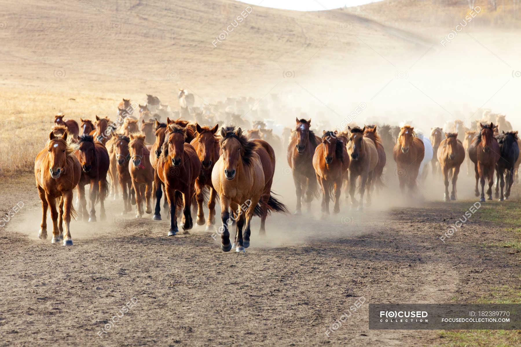 Herd Of Wild Horses Running In Inner Mongolia Grassland Copy Space Horizontal Stock Photo 182389770