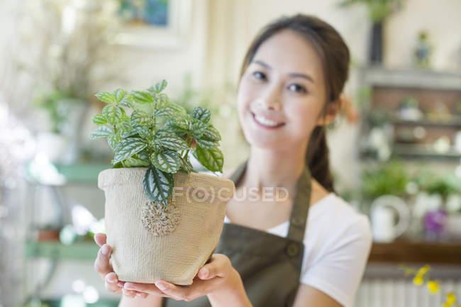 Самка китайского флориста держит горшечное растение в магазине — стоковое фото
