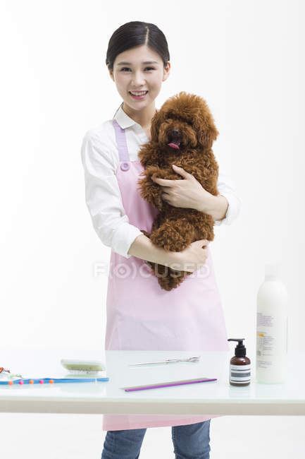 Chinese female pet groomer holding cute poodle — Stock Photo
