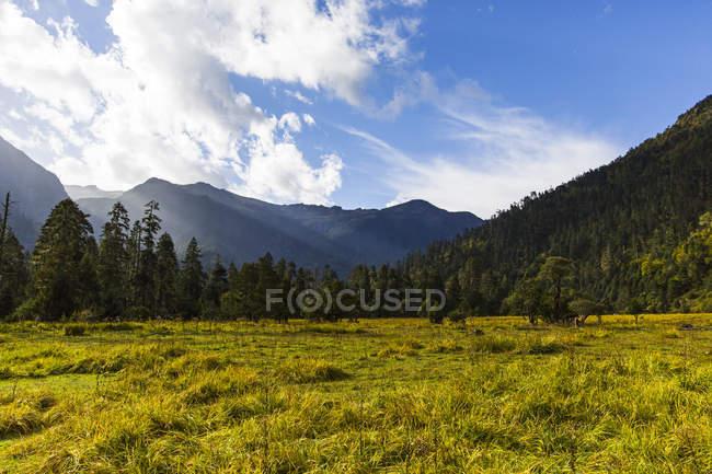 Vue panoramique de la vallée de Nanyi au Tibet, Chine — Photo de stock