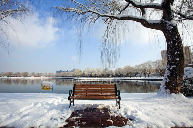 Деревянная скамейка под ивой в тихом парке зимой — стоковое фото