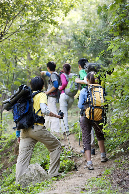 Rear view of friends on hike in forest — Stock Photo