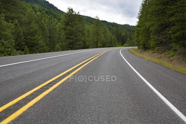 Вид на шосе дороги через соснового лісу — стокове фото
