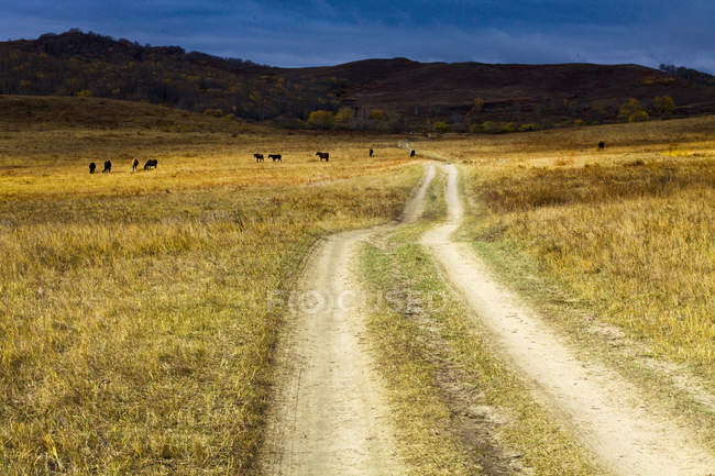 Rural scene of road in Chinese countryside — Stock Photo