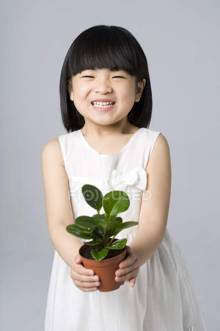 Little Chinese girl holding potted plant on gray background — Stock Photo