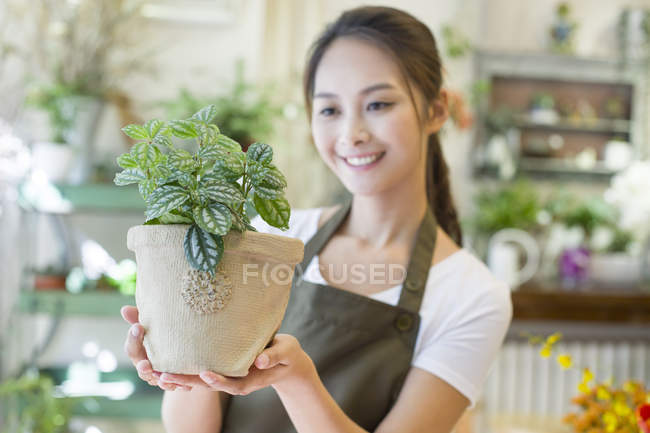 Китайський флорист, тримаючись за руки potted завод — стокове фото