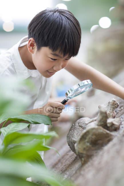 Китайський хлопчик за допомогою збільшувального скла в музей природної історії — стокове фото