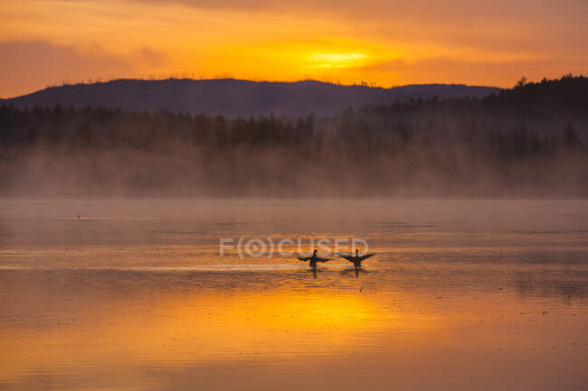 Birds on lake with sunset sky reflection and mountains — Stock Photo