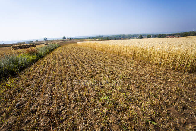 Agricultural field in Hebei province, China — Stock Photo