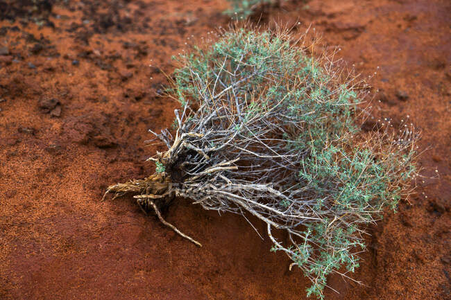 Unrooted plant on orange sand, close up shot — Stock Photo