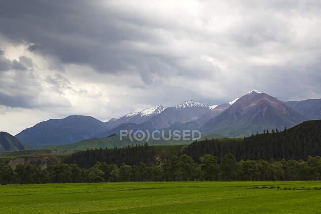 Lush green field and rocks under overcast sky, Qinghai, China — Stock Photo