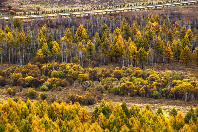 Scenic view of forest trees in Aershan, China — Stock Photo