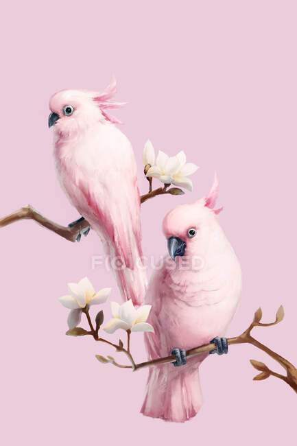 Pink parrots perching on branches with blooming magnolia flowers — Stock Photo