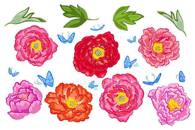 Set of various peony flowers, butterflies and green leaves — Stock Photo