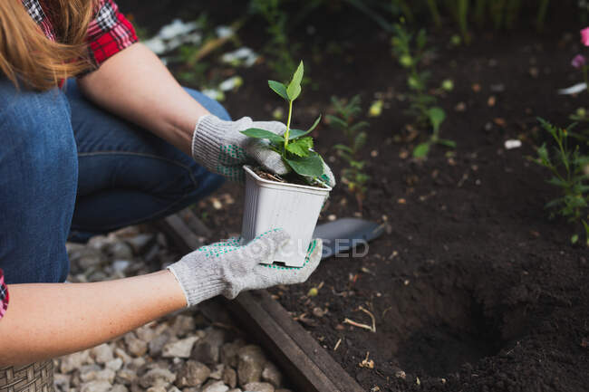 Cropped image of woman planting flowers in garden — Stock Photo