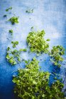 Green young sprouts — Stock Photo