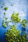 Grüner junge Sprossen — Stockfoto