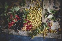 Fresh ripe berries — Stock Photo