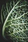 Свежий зелёный лист капусты — стоковое фото
