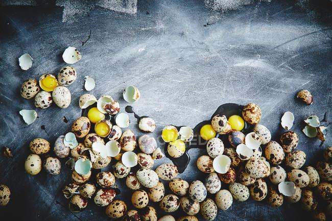 Quail eggs with egg shells — Stockfoto