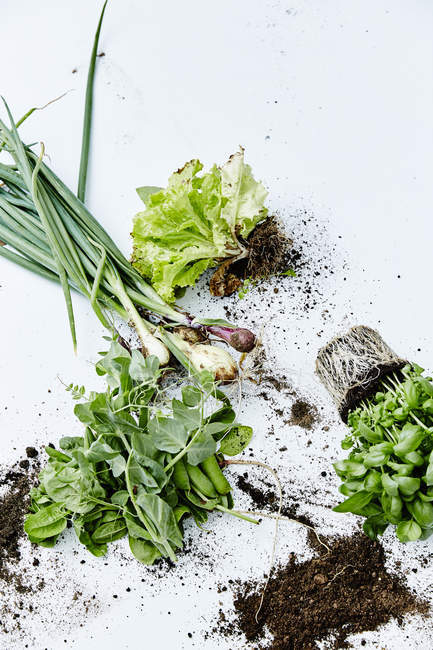Fresh healthy green vegetables — Stockfoto