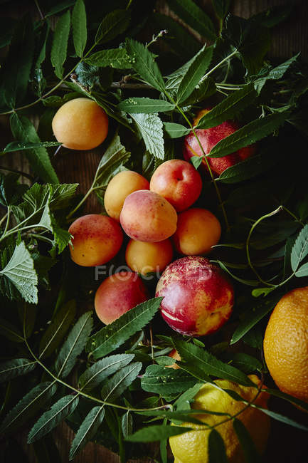 Summer fruits and plants — Stock Photo