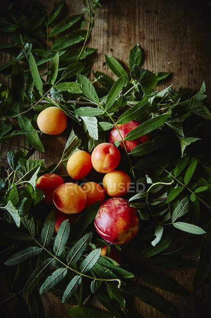 Fresh ripe apricots and nectarines — Stock Photo