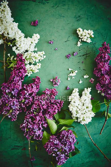 Hermosas flores lila - foto de stock