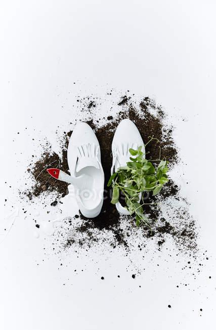 Белые туфли с зеленым горошком и почвы — стоковое фото