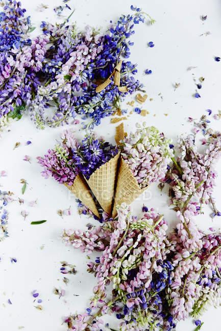 Красивые цветы в вафельных рожках — стоковое фото
