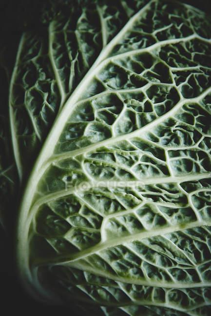 Hoja de col verde fresca - foto de stock