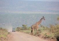 Giraffa al parco nazionale di etosha — Foto stock