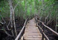 Bosque tropical en la isla de Zanzíbar, Tanzaniya - foto de stock